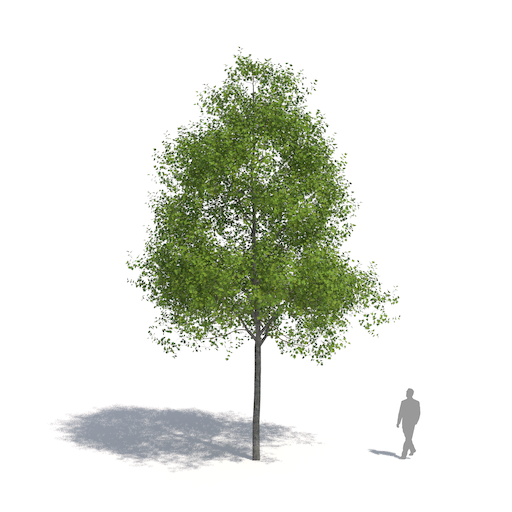 how to get trees in vray sketchup