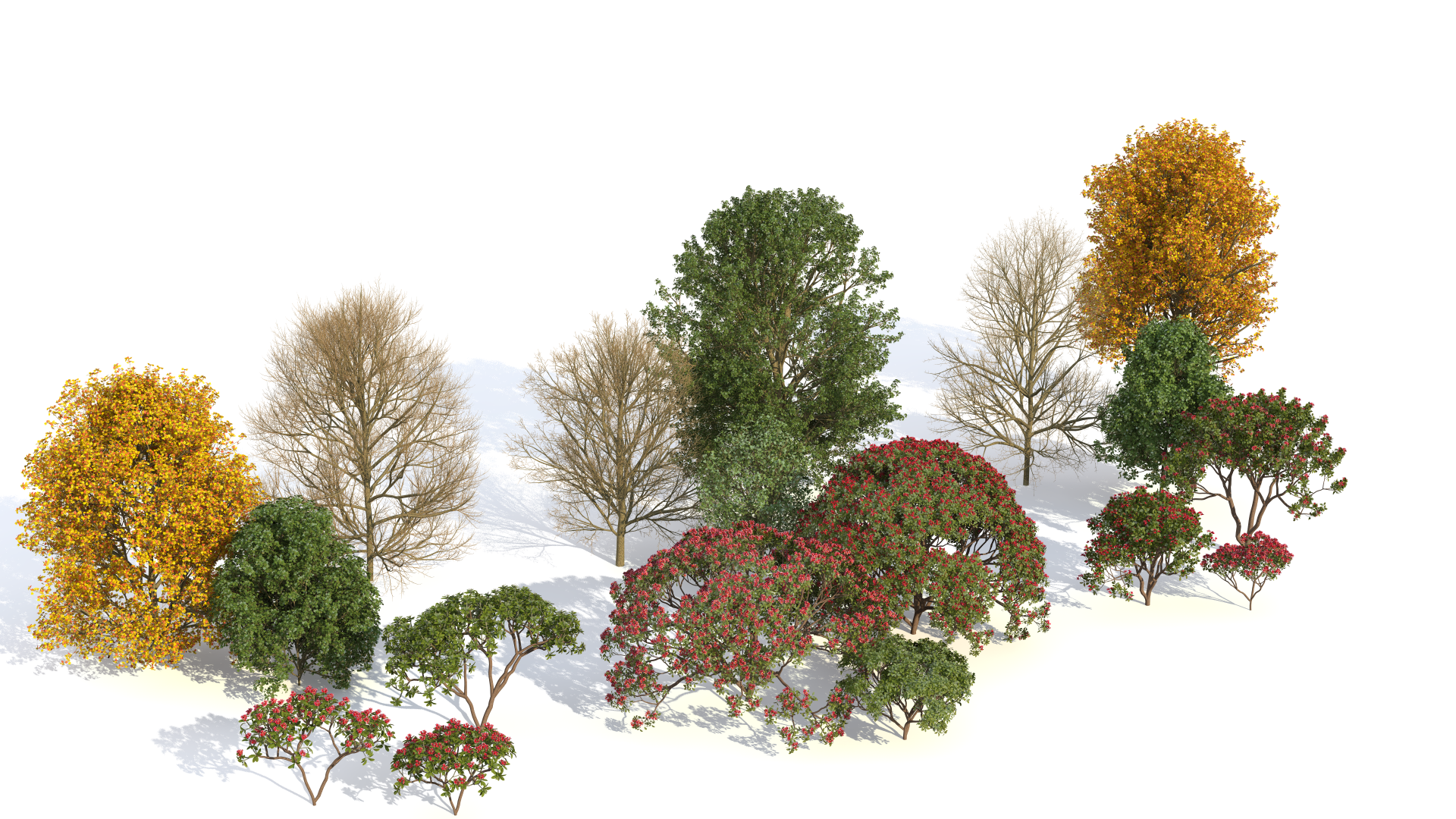 Rendering of Laubwerk Plants Kit Freebie trees by Jan Walter Schliep using CINEMA 4D and VRAYforC4D