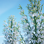 Mound lily yucca (Yucca gloriosa) - rendering by Mario Kelterbaum using Cinema 4D and OTOY OctaneRender