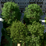 Kizo, 2013, Laubwerk Plants Kit 1 and Freebie, rendered in VRAYforC4D