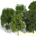 Jan Walter Schliep, Laubwerk Plants Kit 2, rendered in VRAYforC4D