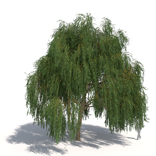 plants kit 2 weeping willow