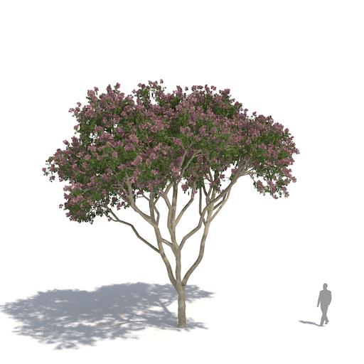 laubwerk plants kit 3 rain tree
