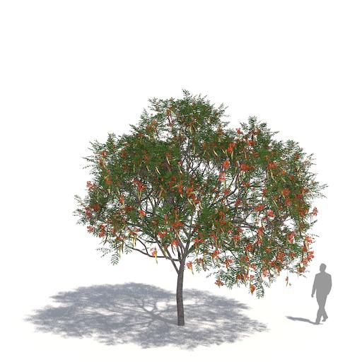 laubwerk plants kit 3 royal poinciana