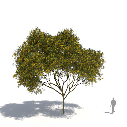 laubwerks plants kit 3 yellow flame tree
