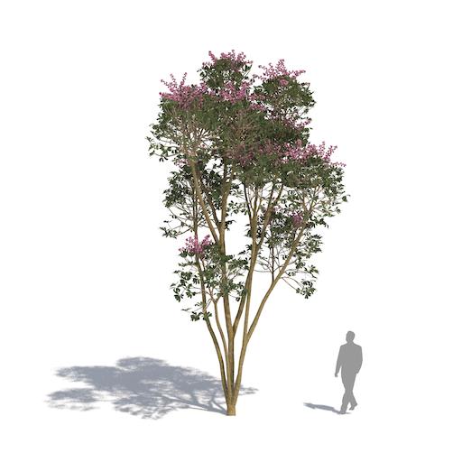 laubwerk plants kit 3 queensland umbrella