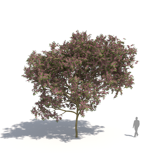 laubwerk plants kit 3 pink trumpet tree