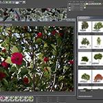Screenshot Laubwerk Plants Kit 1.0.9 in MAXON CINEMA 4D using V-Ray 2-sided materials