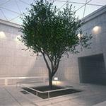 Example by Rob Redman using MAXON Cinema 4D, Maxwell Render, Laubwerk Plants Kits)