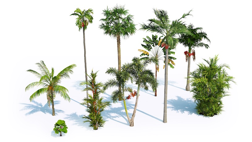 Laubwerk Plants Kit 7 - Tropical Palms - Toolfarm