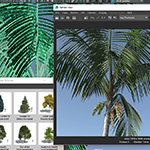 Screenshot of the new Laubwerk Kentia palm using the new Laubwerk Player plugin for Maya rendered in iray
