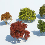 Kit 10 - trees in a row in autumn- rendering by Mario Kelterbaum using Cinema 4D and V-Ray