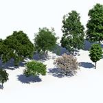 Rendering of Laubwerk Plants Kit 10 trees by Jan Walter Schliep using Cinema 4D