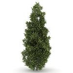 Laubwerk Plants RPC - Western Redcedar